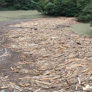 台風19号の大雨により、大量の土砂と流木で埋まった名栗湖の流れ込み