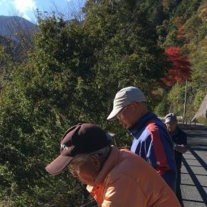 橋上からスタートした名栗湖のワカサギ釣り。ボート釣りは12月1日開始