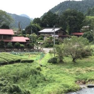【名栗川の釣り場動画】水位上昇あるも、濁り徐々に解消へ。名栗川いよいよ夏本番