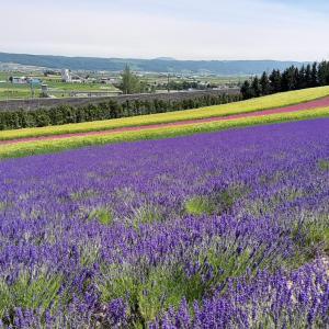 富良野でラベンダー畑を観ながら観光するならどこが良い?「ファーム富田」をブログで紹介!