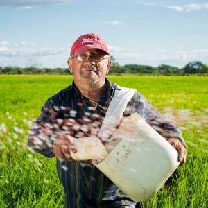 お米が美味しいと思ったことはないけど季節で違う遊びができる田んぼは好きだ。
