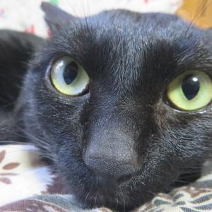 猫が恨み深い由縁は本当です。とうとう仕返しをされて年末の仕事が増えました。