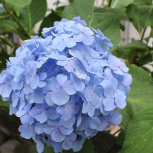 東京二十三区公立小学校の授業再開は6月1日から【休校延長無し】