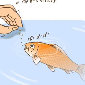 金魚の個性