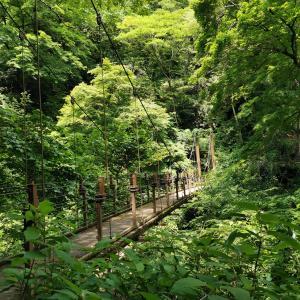【Withコロナのレジャー】高尾山登山で自然を満喫
