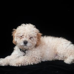 【初めてのペット③】里親募集の中で見つけた、好条件とは言い難いけど心惹かれた犬