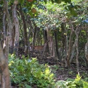 野崎島 〜 鹿の食べログ