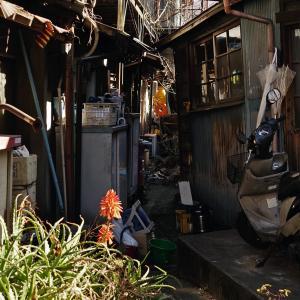 京島とアロエ