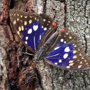 国蝶って何か知ってるかな?