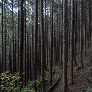 視界を埋め尽くす棒景色 〜 阿寺渓谷遊歩道を歩く#3