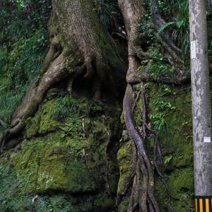 伊豆大島の奇景『 泉津の切通し 』