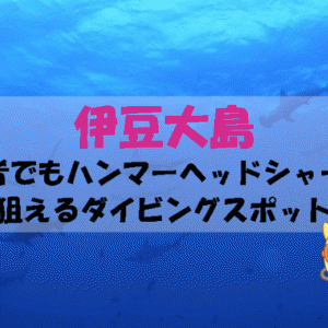 伊豆大島は初心者でもハンマーヘッドシャークを狙えるダイビングスポット