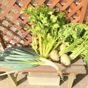 糸島で野菜を収穫してきました♪