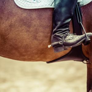 現役ダート馬で一番強いクリソベリルについてまとめてみた