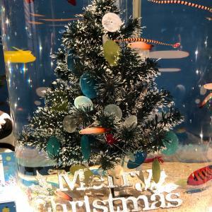サンシャイン水族館 クリスマス♡ とお知らせ♡