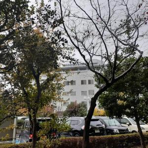 11月 冷たい雨