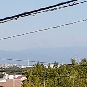 富士山 見えた!