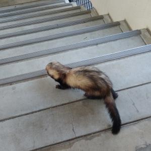 階段で遊ぶその1