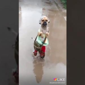 おもしろワンちゃん動画Funny dog