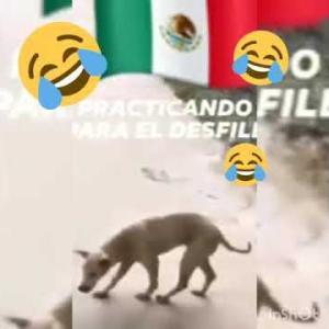 おもしろワンちゃん動画Cute and funny dog videos