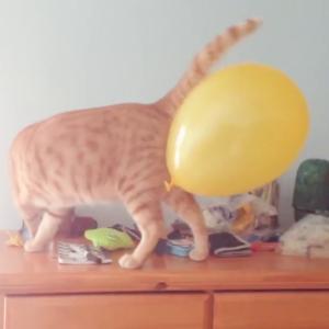面白い猫ちゃん動画Funny Cat and Dog Stucking – Funny Pets Video