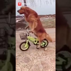 おもしろワンちゃん動画Wow very funny dog 🤣🤣😂😂😂