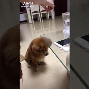 おもしろワンちゃん動画Funny dog 😍😍