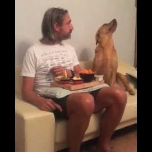 おもしろワンちゃん動画Funny Dog – I was just making sure nobody stole it from ya.