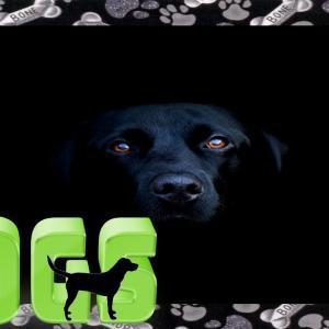 おもしろワンちゃん動画FUNNY DOG VİDEOS