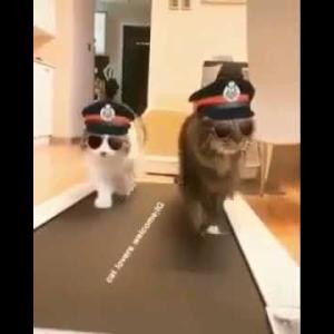 面白い猫ちゃん動画😎😹cat police 😻😻 Funny cat video compilation 2019