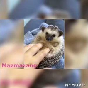 おもしろワンちゃん動画Cutest animals funny dog cat hedghog funny pets 2019
