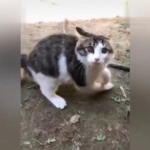 面白い猫ちゃん動画Try Not To Laugh Challenge   Funny Cat 2019 6