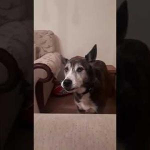 おもしろワンちゃん動画Funny dog video
