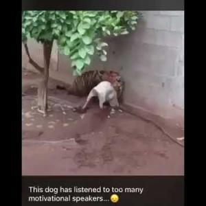 おもしろワンちゃん動画Funny Dog got serious trouble