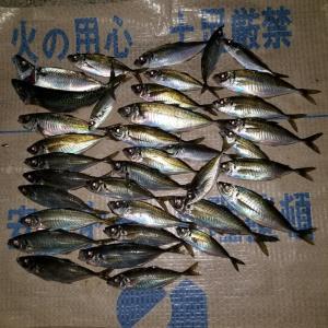 ボートアジング→加太釣行