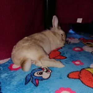 ウサギが!?