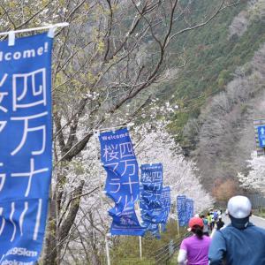 四万十川桜マラソン2020口コミガイド 自己ベスト出しに行こう