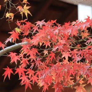 季節写真撮影記 秋の橿原神宮周辺編