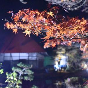 【紅葉-01】真照寺