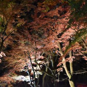 【紅葉-02】三春大神宮