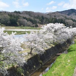 【桜-滝根-04】牧野川の桜並木