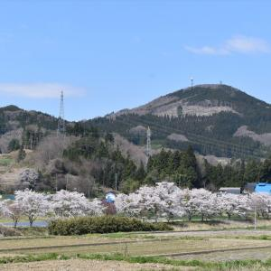 【桜-船引-19】牧野川の桜並木
