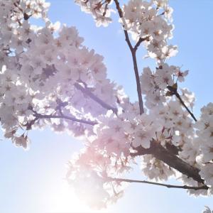 たむランドの桜、見どころガイド