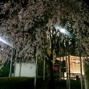 浅草寺境内の六角堂と枝垂れ桜