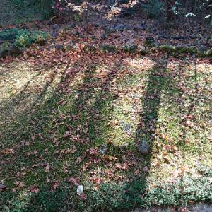 芝生の冬の準備①