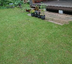 その後の芝生