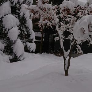 積雪あとの獣道。。。