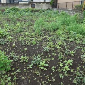アフターコロナ~緊急事態宣言解除後、動き始めた土地売買の状況