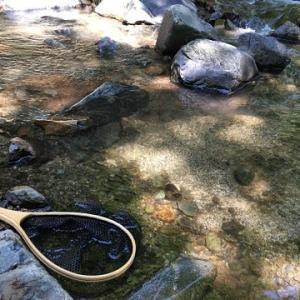 【ゲン担ぎ】釣りのドリンクは何にする?【ボウズ回避】