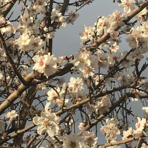 Coming Spring 【春】
